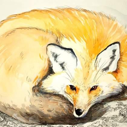 Illustratrice professionnelle donne cours particuliers de dessin et peinture